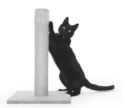 Chat faisant ses griffes