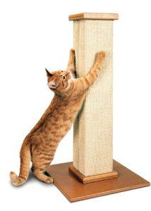 Griffoir Smarcat