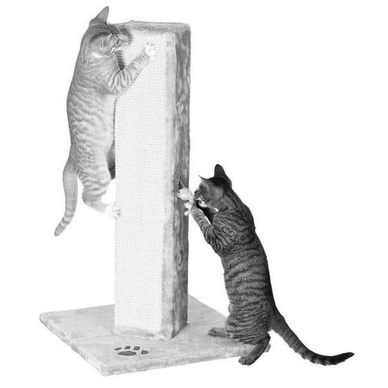 Chats s'amusant sur un griffoir
