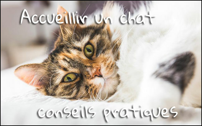 Accueillir un chat : conseils pratiques