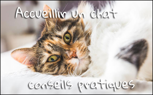 Accueillir un chat, guide pratique