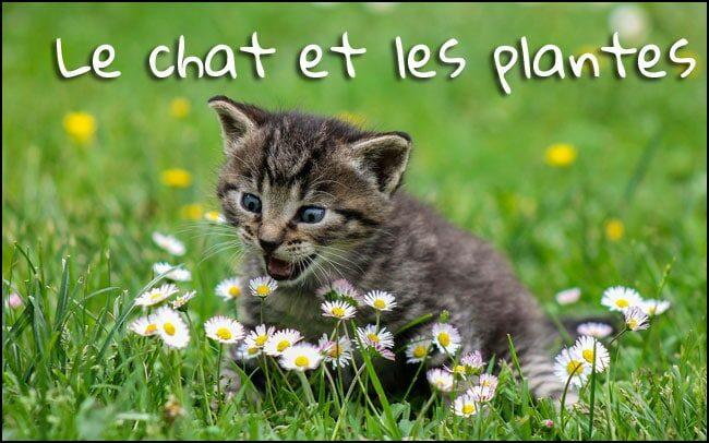 Votre chat et les plantes d'interieur