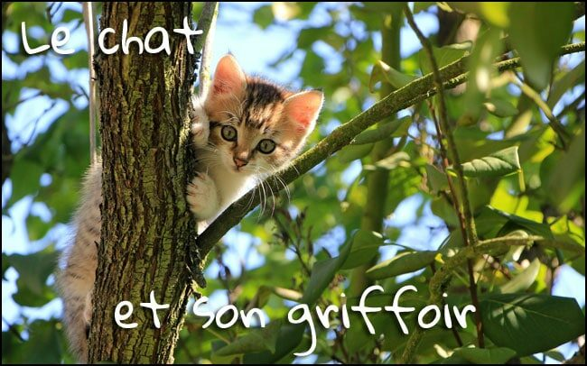 Le chat et son griffoir