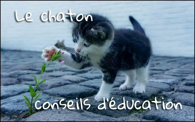 Le chaton : 6 points sur son éducation