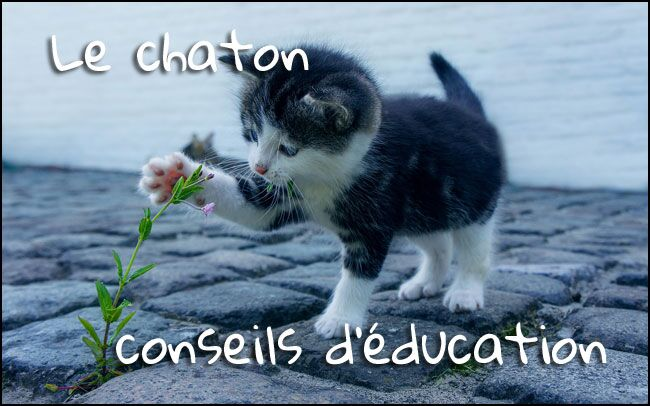 Elements éducatifs à destination du chaton