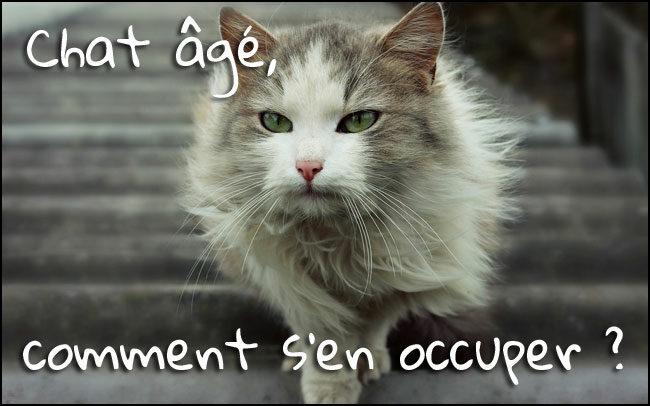 Le chat âgé : comprendre et s'en occuper