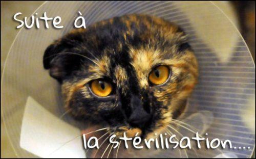 les suites de la stérilisation