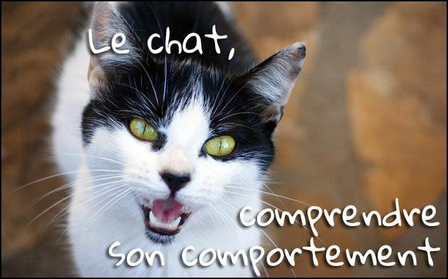 5 points pour comprendre le langage de votre chat
