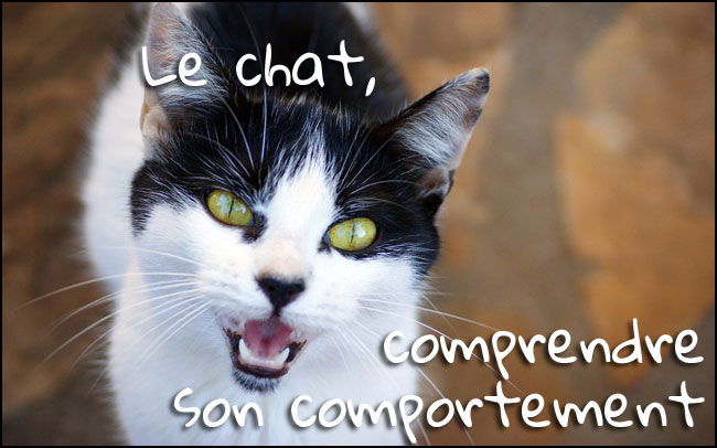 comprendre le comportement du chat