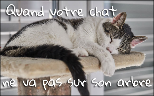 Comment faire quand le chat néglige son arbre à chat