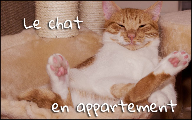 Pour un appartement adapté à votre chat