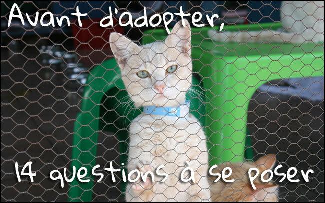 Avant l'adoption d'un chat : 14 questions à se poser