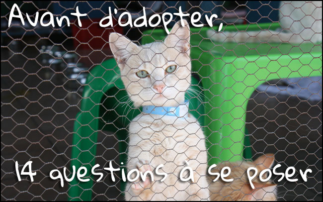 Les questionnements à avoir avant d'adopter un chat