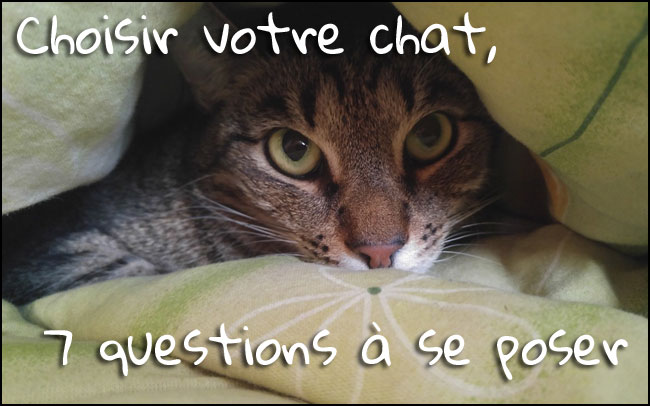 Comment choisir son chat ?