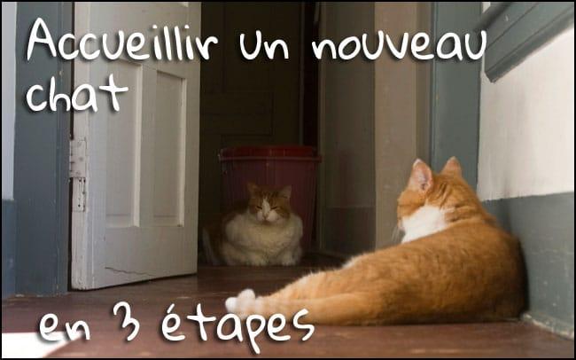 Accueillir un nouveau chat ? 3 étapes pour faire les présentations