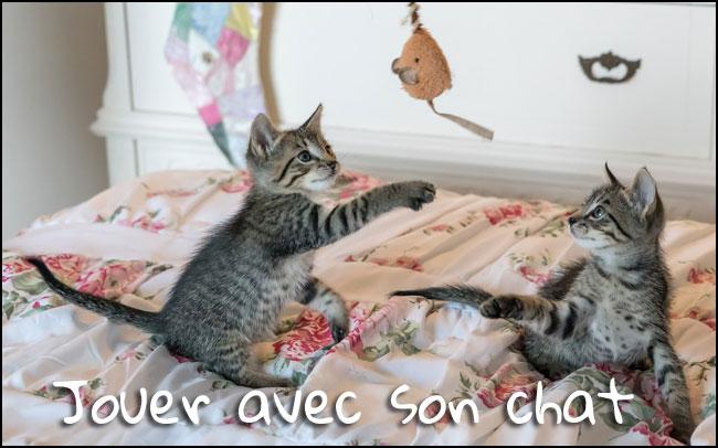 Jouer avec son chat : 10 choses à savoir