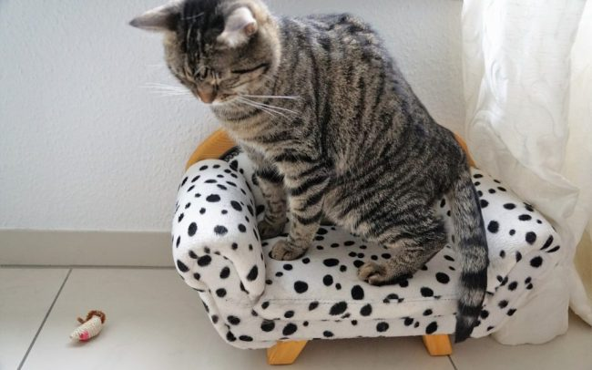 chat observant une souris en peluche