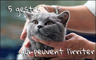 5 gestes qui peuvent irriter votre chat