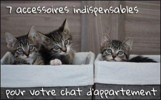7 accessoires indispensables pour votre chat d'appartement !