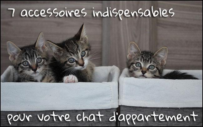 Les accessoires indispensables pour un chat d'appartement